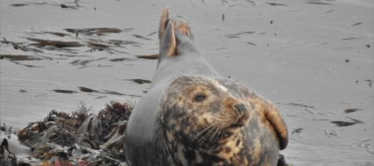 George Welcomes New Funding to Protect Grey Seals In Cornwall